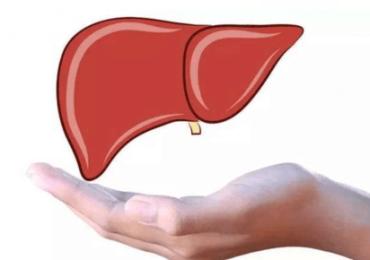 肝癌晚期可以喝灵芝孢子粉吗?